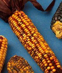 Mangiare mais fa bene, ma senza esagerare