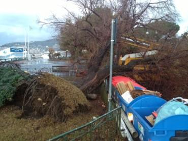 Maltempo, cade albero a Marina Piccola