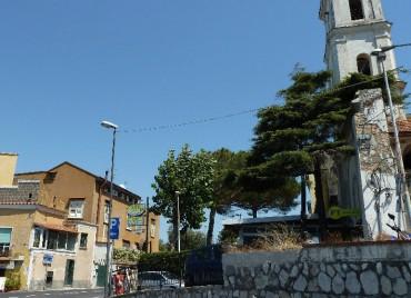 Un cedro ed un pioppo abbattuti al Capo di Sorrento: insorge il Wwf