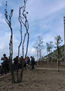 Alberi piantati nelle aiuole di Punta Scutolo, il WWF esprime soddisfazione