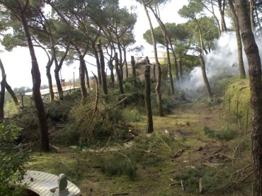 Taglio di pini a Le Tore: Denuncia del Wwf
