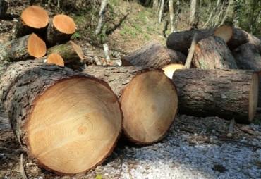 Chi sta abbattendo gli alberi del Monte Faito?