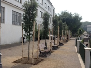 Piantati nuovi lecci nei giardini della villa comunale