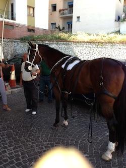 Carrozzelle e cavalli in piazza Tasso: scoppia la polemica