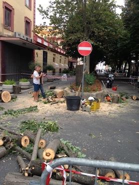 Piazza Tasso transennata: tagliati gli alberi a rischio crollo