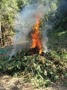 Marjuna-fiamme
