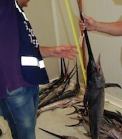 Pesca vietata, controlli a tappeto a Massa Lubrense