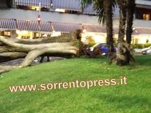 Albero crollato: al suo interno il tronco era praticamente vuoto