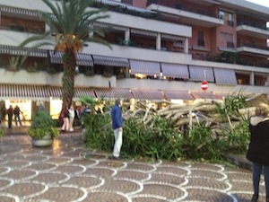 Crolla un enorme albero in Piazza Lauro, attimi di terrore tra i passanti