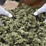 Marijuana-castellammare