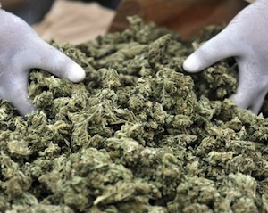 Coltivava e vendeva marijuana, arrestato 54enne di Sorrento