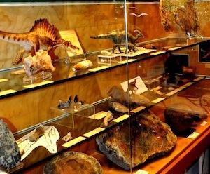 Nuovi fossili nel museo Mineralogico di Vico Equense