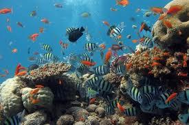 """Uno sbarramento per salvaguardare il """"Banco di Santa Croce"""" contro la pesca illegale"""