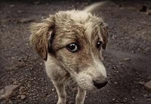 A Piano rinnovato l'accordo per la tutela dei cani randagi