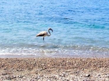 Fenicottero in migrazione si ferma ad Alimuri ed il Wwf lancia le sue proposte per la destinazione dell'ecomostro