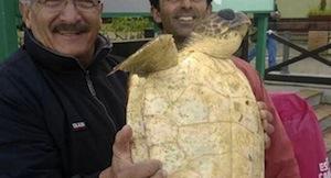 Tartaruga marina salvata nelle acque di Capri