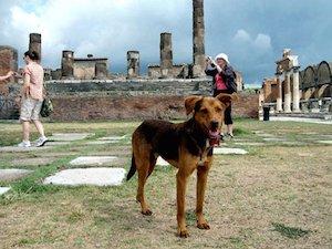 Cani agli scavi di Pompei, la polemica prosegue