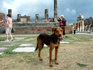 Cani-Pompei