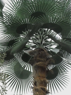 Ripetitore telefonico camuffato da palma, esposto del Wwf
