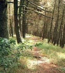 I consiglieri Di Prisco e Savarese: A Sorrento attenzione alla tutela dell'ambiente