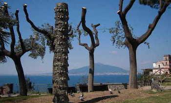 """Cittadini divisi sulla scultura posizionata in """"Villetta Paradiso"""""""