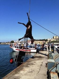 Carcassa di cavallo trovata in mare a Torre Annunziata