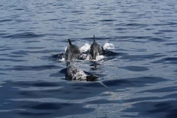 Punta Campanella, dissuasori sulle reti per proteggere i delfini