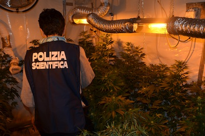 Serra di marijuana in un ex convento, sequestro della polizia – guarda video –
