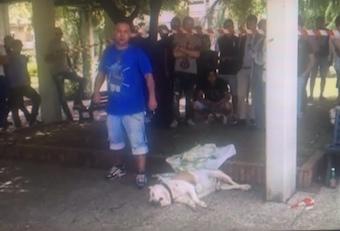 Frattamaggiore, cane sparato da una guardia giurata: la rabbia dei presenti -Guarda Video-