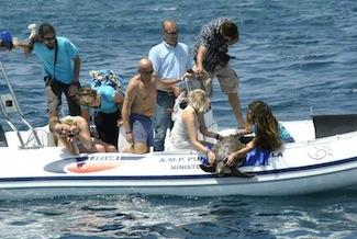 Tornano in mare 4 tartarughe salvate dagli operatori di Punta Campanella