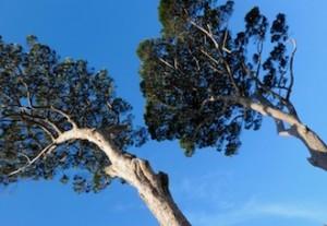 alberi-villafondi4