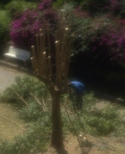 albero-montariello