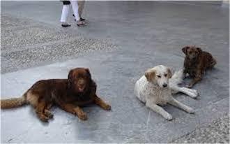 A Sant'Agnello un rifugio per i cani randagi