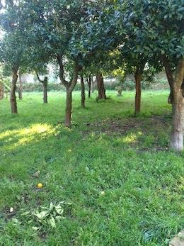 A Montariello la nuova area verde di Sorrento