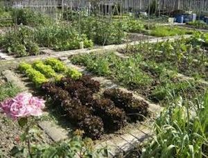 Cura dell'orto e degli animali da cortile, ok agli spostamenti in Campania