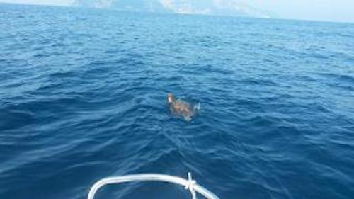 Due tartarughe salvate dal centro Tartanet dell'Area Marina di Punta Campanella