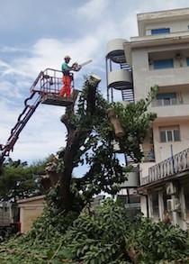 Abbattuti gli alberi nei pressi dell'ospedale di Sorrento, denuncia del Wwf