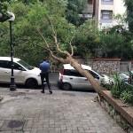 albero3