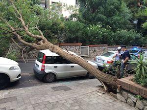Paura a parco Tasso: cade albero gigante su una macchina in sosta -foto&video-