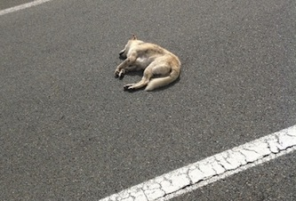 Via degli Aranci: investe un cane davanti al padrone e poi scappa