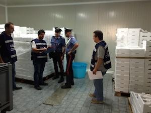 Spigole e orate dalla Grecia alle nostre tavole senza controlli: sequestrate 4 tonnellate