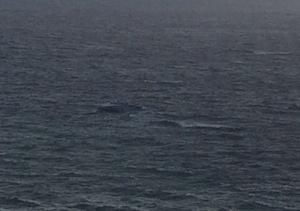 Yacht alla deriva a Massa Lubrense, soccorso da un aliscafo -foto e video-