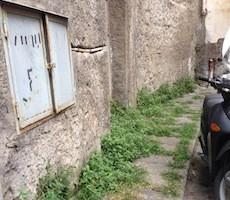 Topi nel centro storico, allarme dei residenti