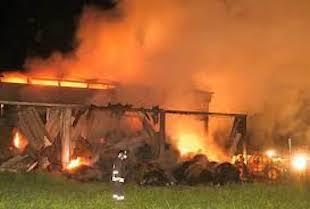 Incendio in una stalla, salvate mucche e capre