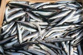 I grandi chef sdoganano il pesce azzurro