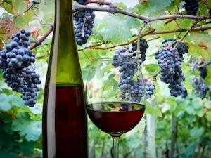 A Priora la XXXV edizione della sagra dell'uva dal 3 al 5 ottobre