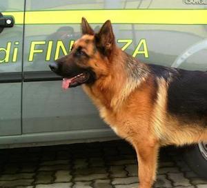 Pusher incastrato dal cane antidroga all'uscita della Circum
