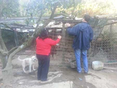 Animali tenuti in pessime condizioni igienico sanitarie: blitz all'alba a Sant'Agnello