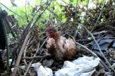 Carcasse di animali nel vallone Lavinola: arriva la denuncia del Wwf