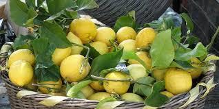 limoni-sorr-press
